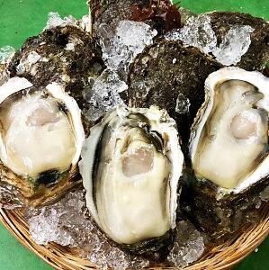 岩牡蠣 天然 日本海産 大5個 1.3〜1.6k 生食用 カラ割り 殻付き 岩がき 岩ガキ お中元 ギフト 贈答 バーベキュー【楽ギフ_のし】【楽ギフ_のし宛書】