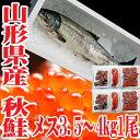 秋鮭 生 切身 一本 メス 3.5〜4kg いくら 生冷蔵 山形県産 鮭 【楽ギフ_のし】【楽ギフ_のし宛書】