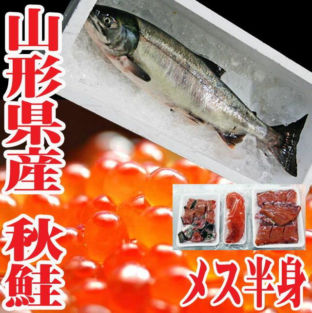 秋鮭 生 切身 メス 3.5〜4kgを半身 いくら 生冷蔵 山形県産 鮭 【楽ギフ_のし】【楽ギフ_のし宛書】 05P01Nov14
