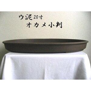 瀬戸焼 オカメ小判 ウ泥20号 松竹梅 盆栽鉢
