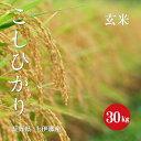 長野県産 こしひかり 上伊那産 1等米 令和1年産 玄米 30kg 【新米】【送料無料】