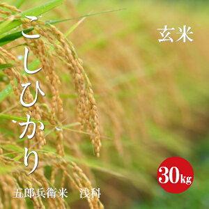 長野県産 こしひかり 五郎兵衛米 特A1等米 令和2年産 玄米 30kg 【新米】【送料無料】