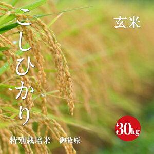 特別栽培米 こしひかり 御牧原産 特A1等米 令和2年産 玄米 30kg 【新米】【送料無料】