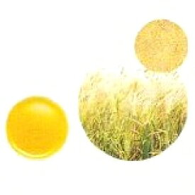 【GET!生活の木 小麦胚芽オイル(ウィートジャームオイル) 25mL】アロマテラピー