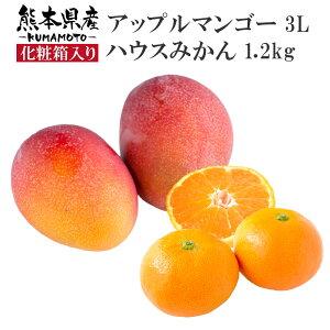 【産地直送】熊本県産 ハウスみかん約1.2kg & アップルマンゴー3L セット 化粧箱入り