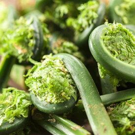 2021年信州産天然・コゴミ800g【ご予約受付中】とても貴重な旬の山菜をお届け(大小バラ詰め)天然山菜がご家庭でお楽しみいただけます他の山菜との同梱可能です。朝採れ新鮮を直送/こごみ/天ぷら