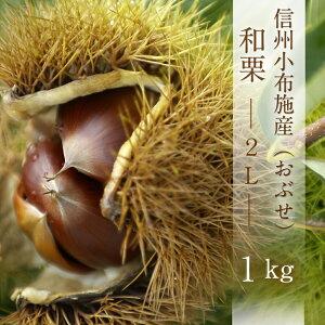 2021年ご予約受付中【信州小布施産 1kg】 和栗2Lサイズ10月中旬から出荷 着日のご指定はできません 北海道・沖縄をのぞき送料無料でお届けします。