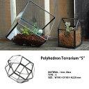 """Polyhedron Terrarium """"S""""ポリへドロンテラリウム """"S"""" グリーンインテリア エアプランツ 観葉植物 DETAIL"""
