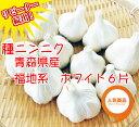 野菜種 ニンニク 青森県産 福地系ホワイト 6片 1kg