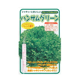 野菜種 レタス ハンサムグリーン Lコート 5000粒