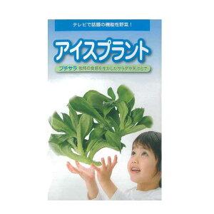 野菜種 アイスプラント プチサラ 1ml(キダネ)武蔵野種苗園