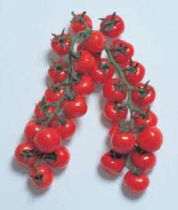 ミニトマト 種 CF プチぷよ 渡辺採種場 9粒