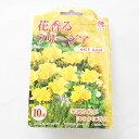 花の球根 花香るフリージア 一重咲き 黄花種 10球 2個までメール便発送