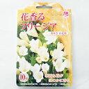 花の球根 花香るフリージア 一重咲き 白花種 10球 2個までメール便発送