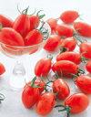 ミニトマト 種 アイコ 1000粒 サカタのタネ