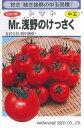 野菜種 中玉トマト Mr.浅野のけっさく 100粒【ゆうパケット対応可能】【取り寄せ】