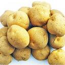 種芋 じゃがいも キタアカリ M〜Lサイズ 10kg