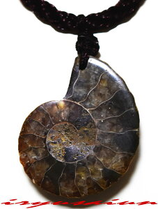 天然 アンモナイト 菊石 カット化石 ペンダントトップ男女兼用 新品 一点ものレディースネックレスメンズネックレスnecklace ammonite fossil威龍彩雲通販
