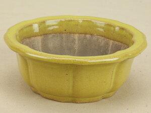 【伊予路園】【盆栽鉢】 陽明交趾/輪花式鉢 [黄交跳][小振りサイズの小鉢]【ミニ鉢〜小鉢】