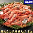 楽天市場 エビ エビの種 しゅ あまエビ 人気ランキング1位 売れ筋商品