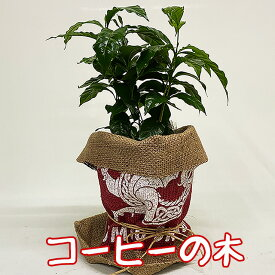 コーヒーの木 観葉植物 5寸 珈琲の木 豆袋 麻袋 ラッピング無料 プレゼント 母の日 ギフト 父の日 インテリアグリーン インテリア おしゃれ 鉢 花ギフト