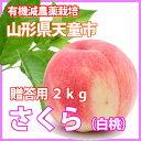 桃 もも 送料無料 【 白桃 さくら 贈答用 2kg 加藤農園 】 山形産 ギフト ボックス 敬老の日 朝摘み クーポン 訳あり …