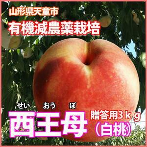 桃 白桃 西王母 送料無料  国産 ギフト 【 西王母 秀 3kg 8個〜12個 満杯詰 加藤農園 有機減農薬栽培※発送期間は( 9月下旬〜10月上旬 ) 】 フルーツ もも 家庭用 白桃 5kg 農産物 ポイント