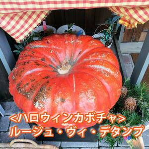 ハロウィン かぼちゃ カボチャ 生かぼちゃ ルージュヴィデタンプ 小 2個 おばけかぼちゃ 特大 飾り 巨大 置物 装飾 オブジェ パンプキン オーナメント 玄関 オブジェ 花ギフト ポイント消化 1