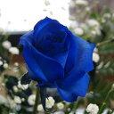 青いバラ ブルーローズ 【 追加用ブルーローズ1本(単品購入不可) 】 誕生日 プレゼント 青バラ 花束 青い薔薇 青薔薇 花 結婚記念日 送別会 花ギフト 青 薔薇 バラ 苗 サントリー 生花 レインボーローズ 成人式