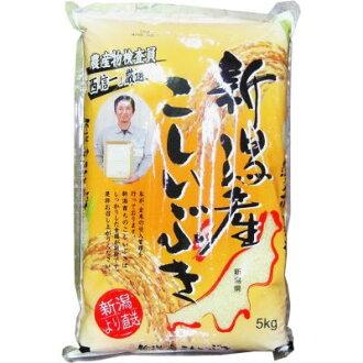 -在新泻县小史 Ibuki 5 公斤 ■ c3 的水稻