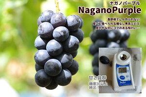 【ナガノパープル3房(1.2kg以上)】長野産 種無し 皮ごと ぶどう ブドウ 送料無料