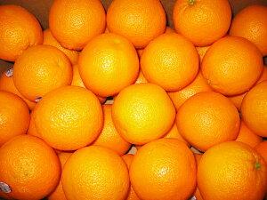アメリカ産オレンジMサイズ20個〔C〕北港直販☆おれんじ