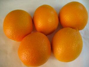 アメリカ産オレンジMサイズ5個〔C〕北港直販☆おれんじ