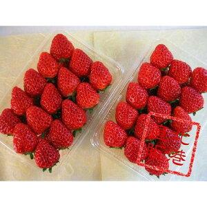 北海道産けんたろう(苺)500g(250g×2パック)〔C〕北港直販☆いちご・イチゴ