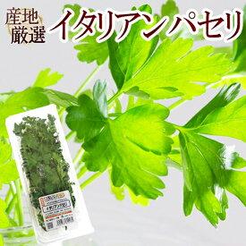 """産地厳選 """"イタリアンパセリ"""" パック入り 1pc"""