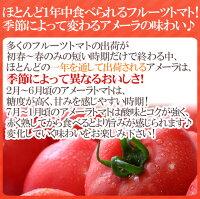 """静岡県""""高糖度フルーツトマトアメーラ""""大きさおまかせ約1kgほんのちょっと訳あり化粧箱入り"""