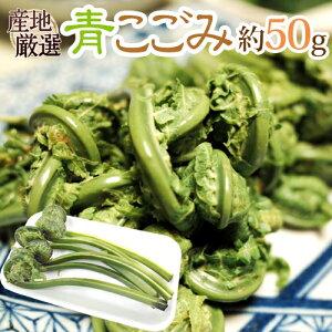 """""""青こごみ(アオコゴミ)"""" 約50g 大きさおまかせ 山菜【予約 2月以降】"""