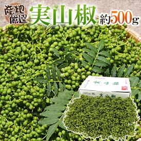 """""""実さんしょ""""(生山椒) 1箱 約500g 山椒【予約 5月中旬以降】"""