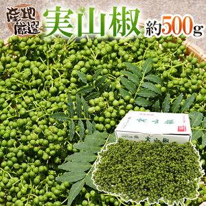 """【送料無料】""""実さんしょ""""(生山椒) 1箱 約500g 山椒【予約 5月中旬以降】"""