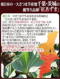 """千葉・茨城県産""""紅あずま""""Mサイズ約5kgさつまいも"""