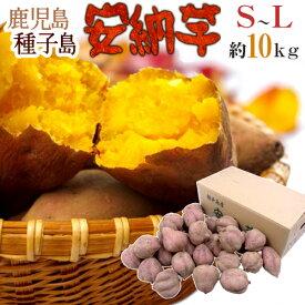 """【送料無料】種子島産 """"安納芋"""" S〜Lサイズ 約10kg【予約 10月下旬以降】"""