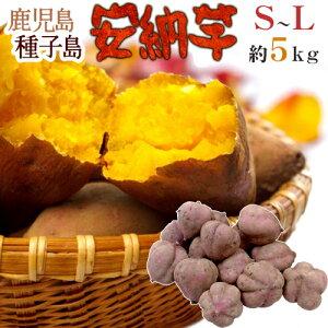 """【送料無料】種子島産 """"安納芋"""" S〜Lサイズ 約5kg【予約 10月下旬以降】"""