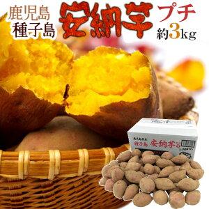 "【送料無料】種子島産 ""安納芋"" プチサイズ 約3kg【予約 10月下旬以降】"