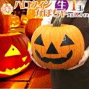 """【送料無料】北海道産 """"ハロウィンかぼちゃ"""" 2Lサイズ おもちゃかぼちゃ【予約 10月発送】"""