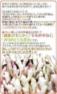 """和歌山県産""""新しょうが""""秀品Lサイズ約4kg"""