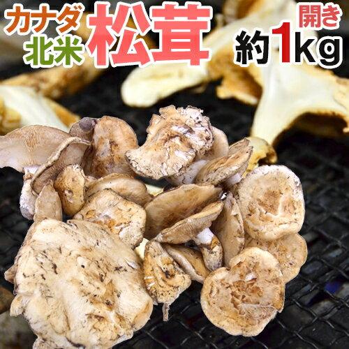 """【送料無料】カナダ・北米産 """"松茸"""" 約1kg 開き 大きさおまかせ【予約 10月以降】"""