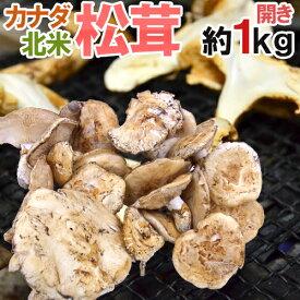 """【送料無料】カナダ・北米産 """"松茸"""" 約1kg 開き 大きさおまかせ【予約 入荷次第発送】"""
