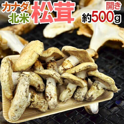 """【送料無料】カナダ・北米産 """"松茸"""" 約500g 開き 大きさおまかせ【予約 10月以降】"""