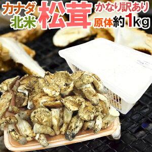 """カナダ・北米産 """"松茸"""" かなり訳あり 約1kg 原体 大きさおまかせ【予約 9月中下旬以降】 送料無料"""