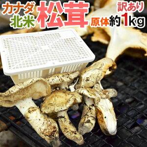 """カナダ・北米産 """"松茸"""" 訳あり 約1kg 原体 大きさおまかせ【予約 9月中下旬以降】 送料無料"""